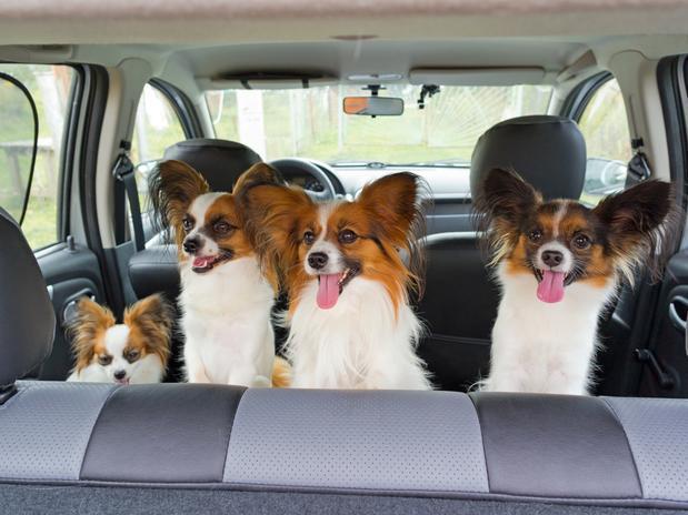 Animais Pequenos podem Causar Problemas no Carro